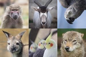 animalele de la zoo02