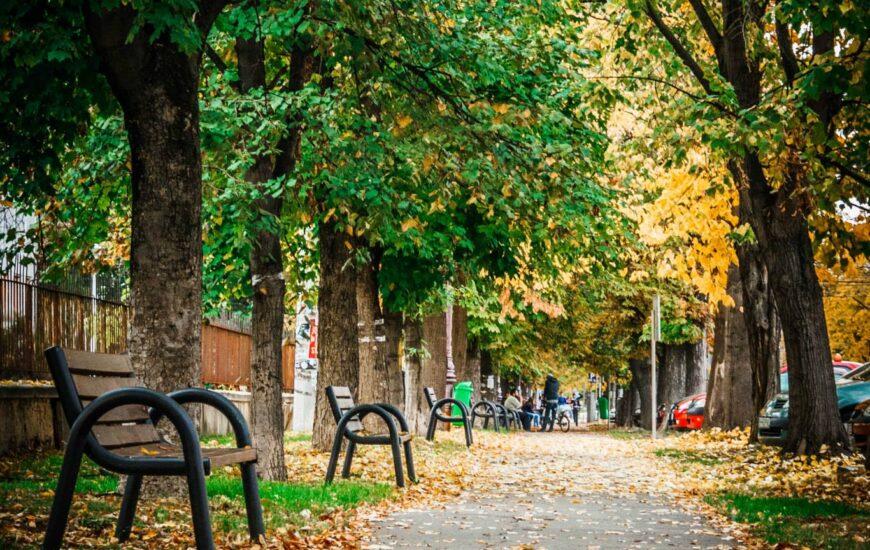 Strada Universitatii