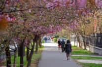 A venit primăvara